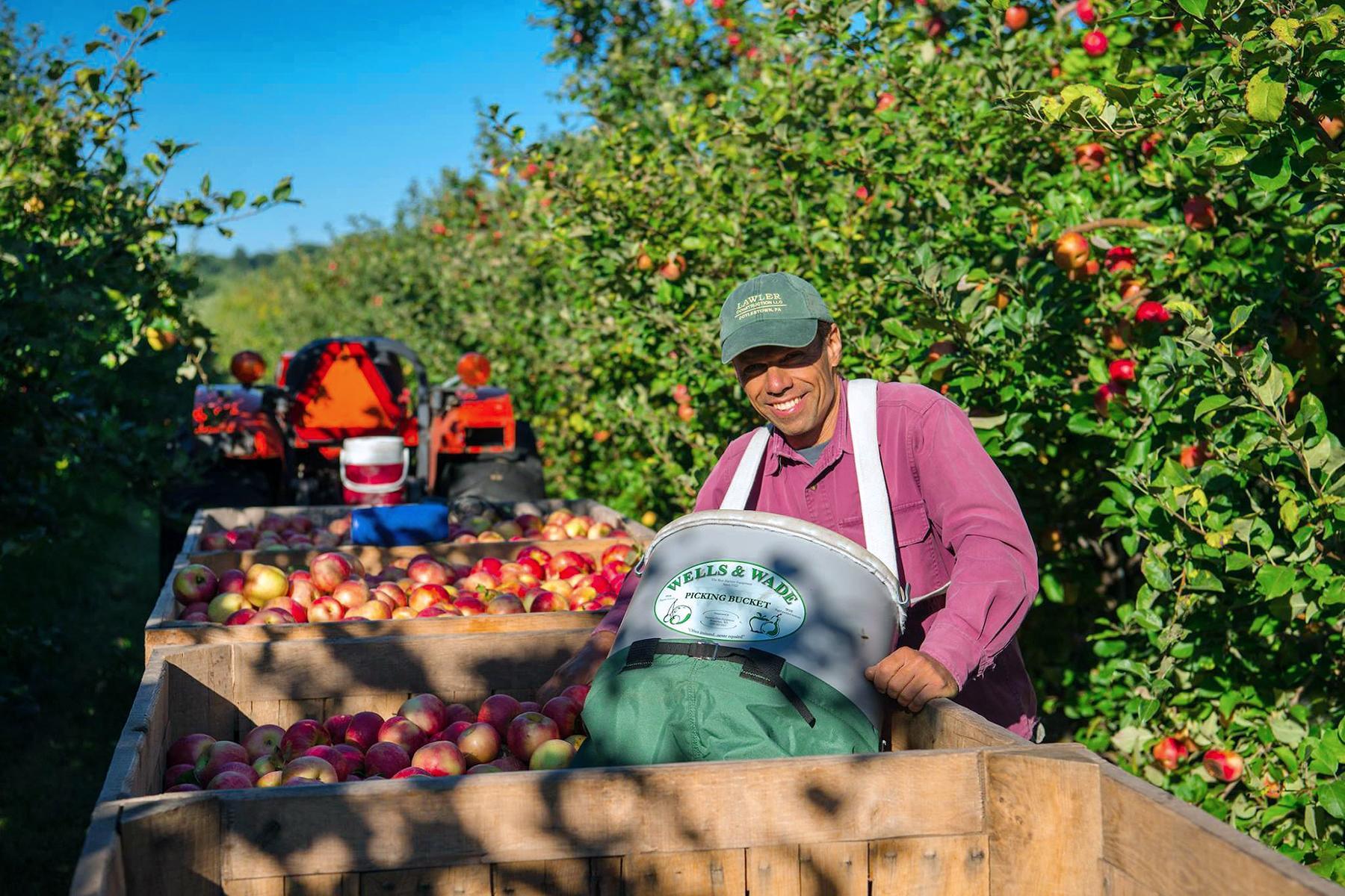 Apple Picker Jobs in Canada